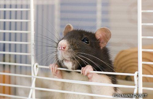 Hamster 2 - 17.jpg