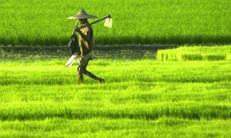 Indian-farmer.jpg