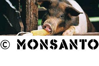Monsanto_pig.jpg