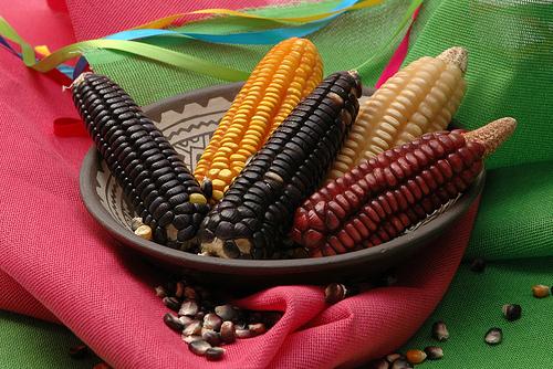 mexican_corn_CIMMYT.jpg